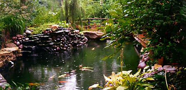 Bryan and Bay Batemans 9,000-gallon pond holds award-winning champions